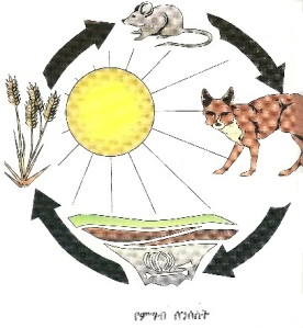 Tadesse's illustration of the food chain
