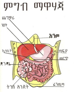 "An illustration of the ""food digestion system"""