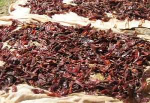 Peppers drying in the Ethiopian sun before becoming berebere